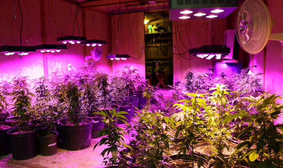 Cannabis light set-up