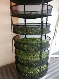 How to Dry Marijuana - Rack