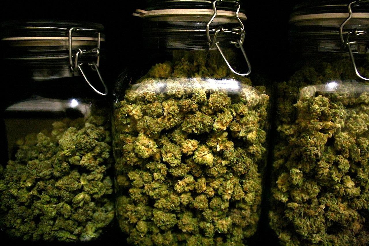 Marijuana curing in jars