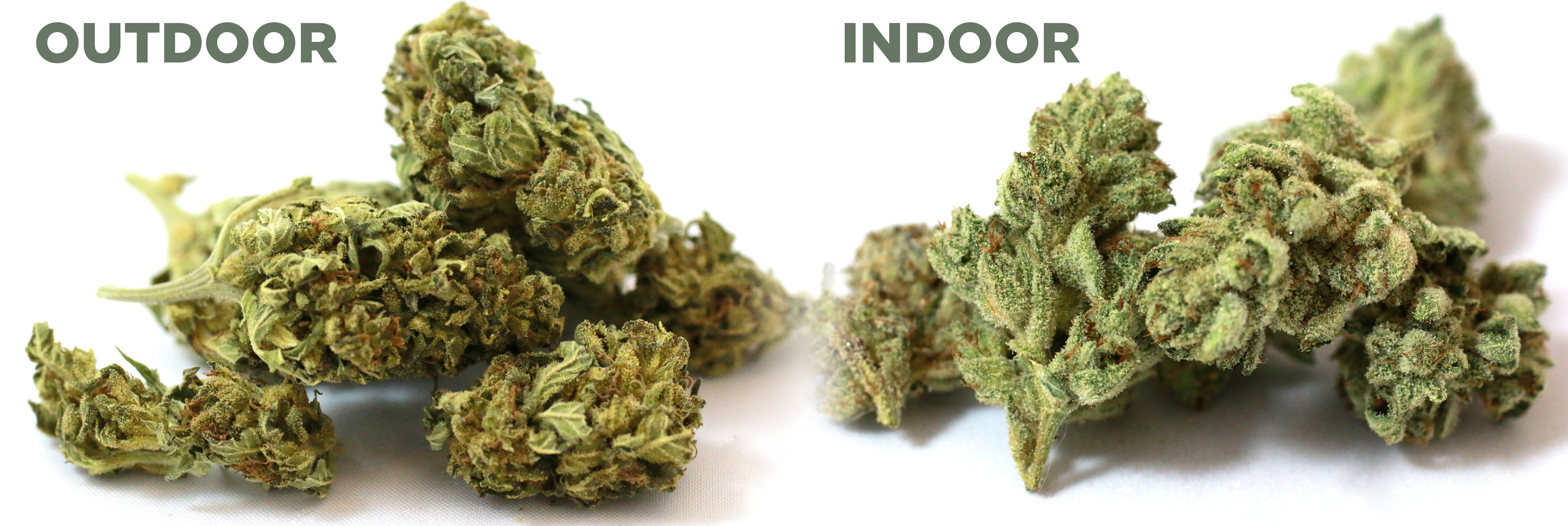 growing cannabis indoors vs outdoors
