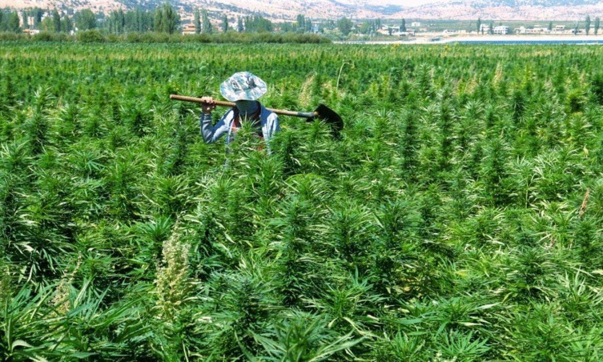 emerging_cannabis_markets_2021_Bekka