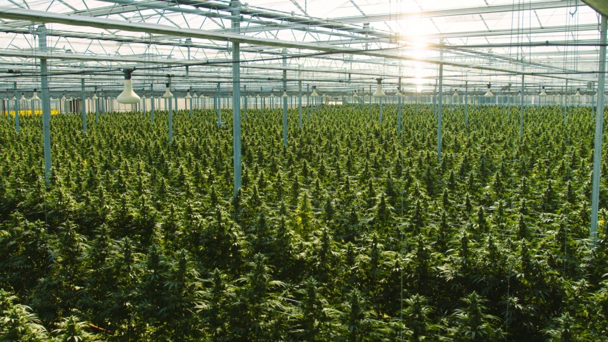 emerging_cannabis_markets_2021_Switzerland