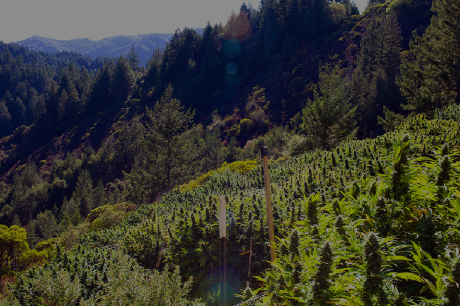The Enchanted Emerald Triangle