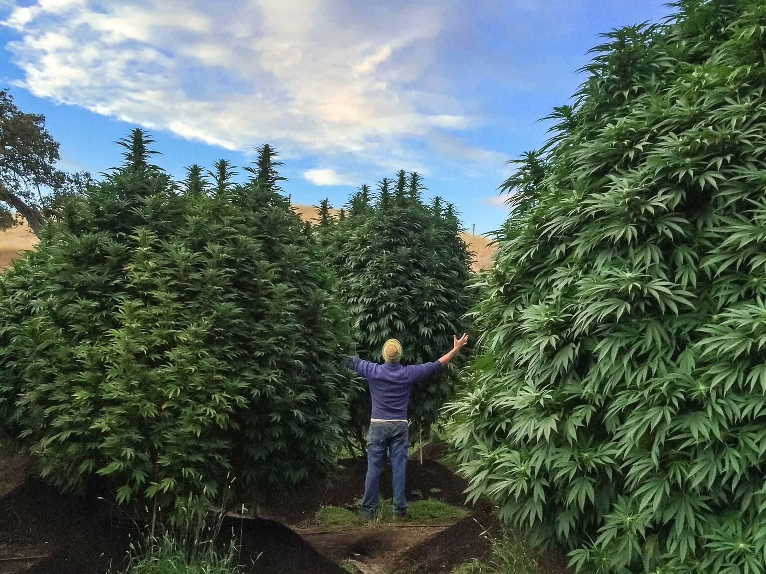 cannabis community