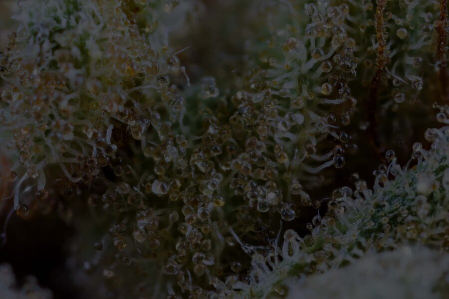 Types of Trichomes